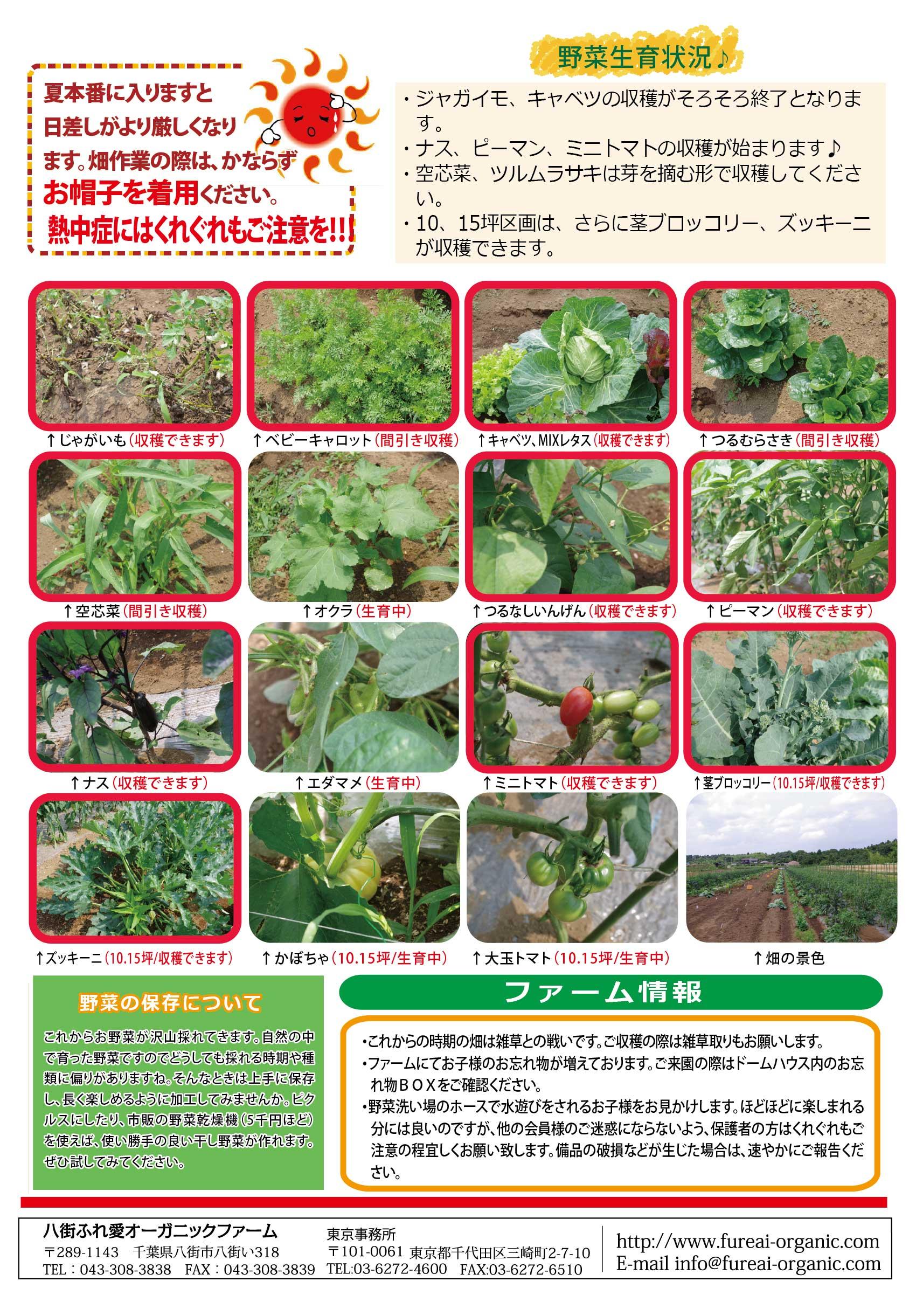 野菜生育状況 ジャガイモ・キャベツの収穫がそろそろ終了となります。ナス・ピーマン・ミニトマトの収穫が始まります♪空芯菜・ツルムラサキは芽を摘む形で収穫してください。10/15坪区画はさらに茎ブロッコリー、ズッキーニが収穫できます。