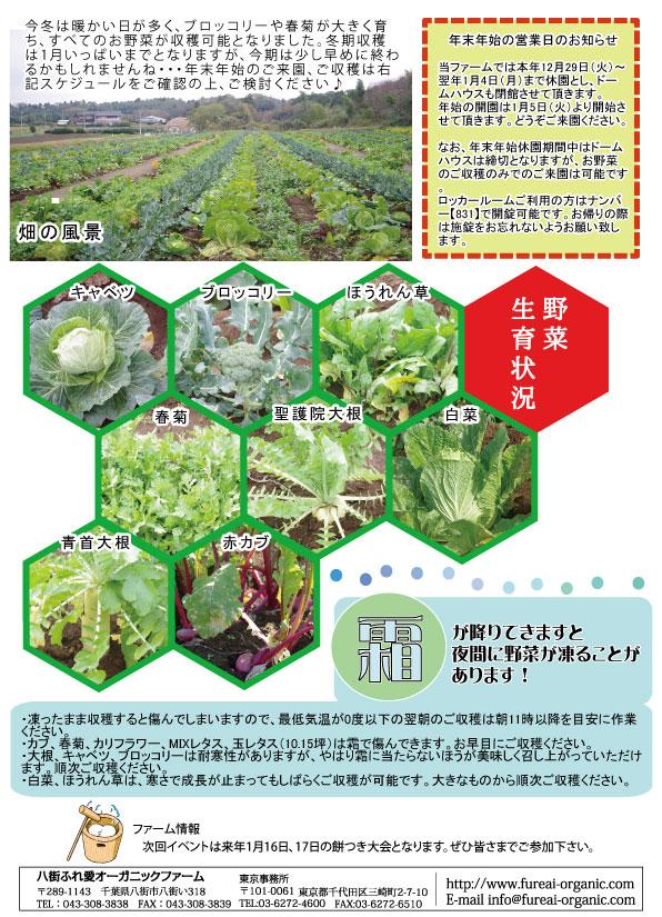 野菜生育状況 霜が降りてきますと夜間に野菜が凍ることがあります!