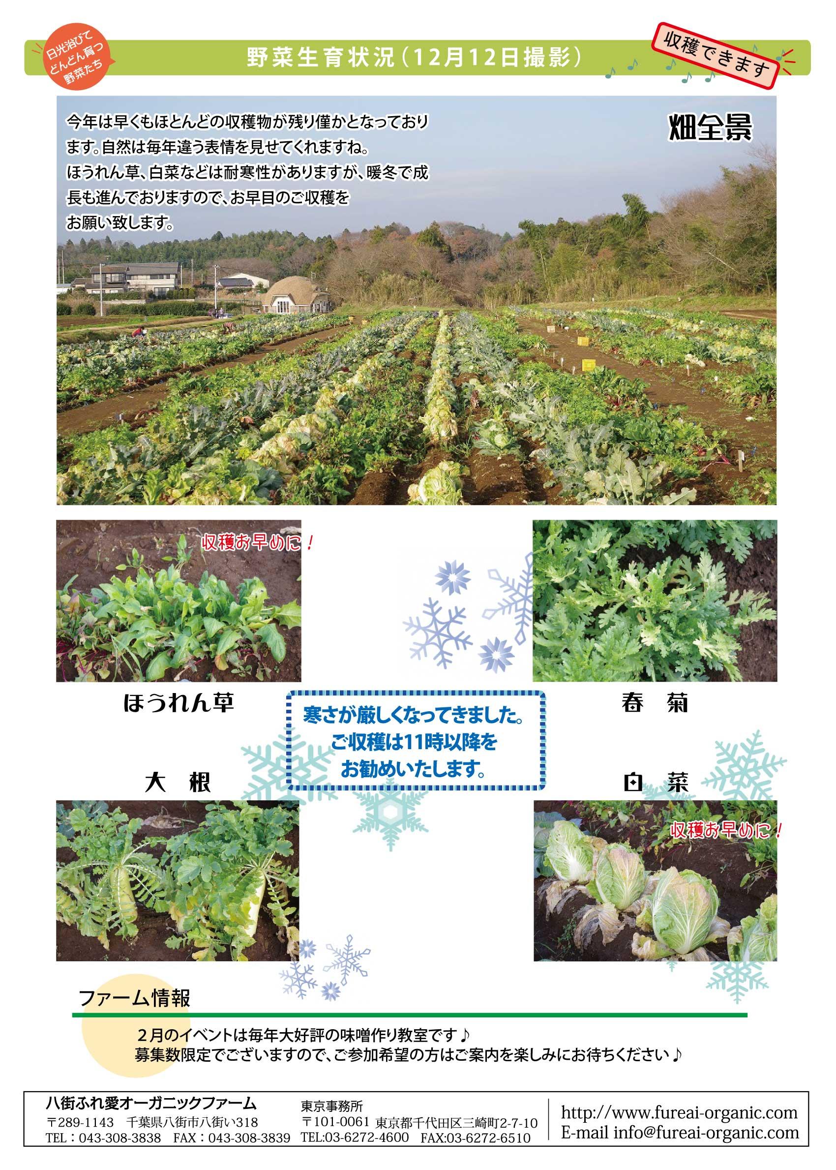 野菜生育状況 今年は早くもほとんどの収穫物が残り僅かとなっております。自然は毎年違う表情を見せてくれますね。ほうれん草、白菜などは耐寒性がありますが暖冬で成長も進んでおりますので、お早めのご収穫をお願いいたします。