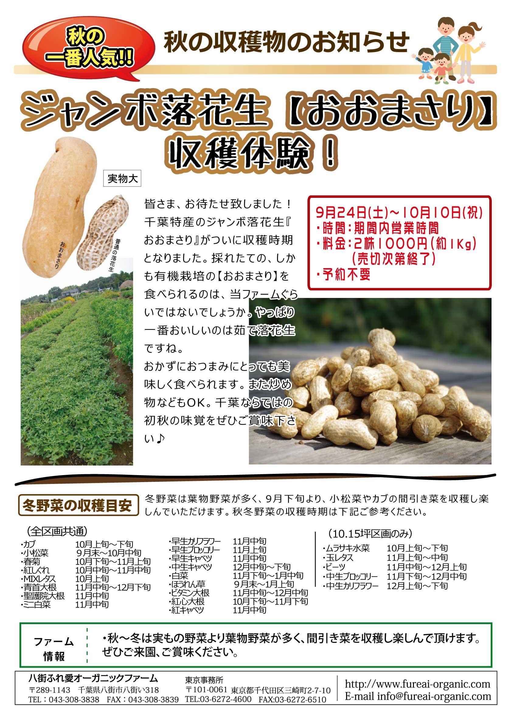 秋の収穫物のお知らせ じゃんぼ落花生【おおまさり】収穫体験!